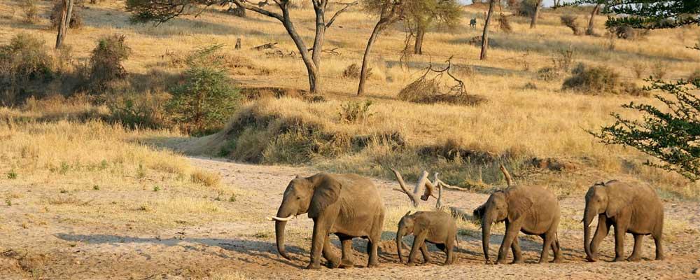 3-days-safari-northern-tanzania