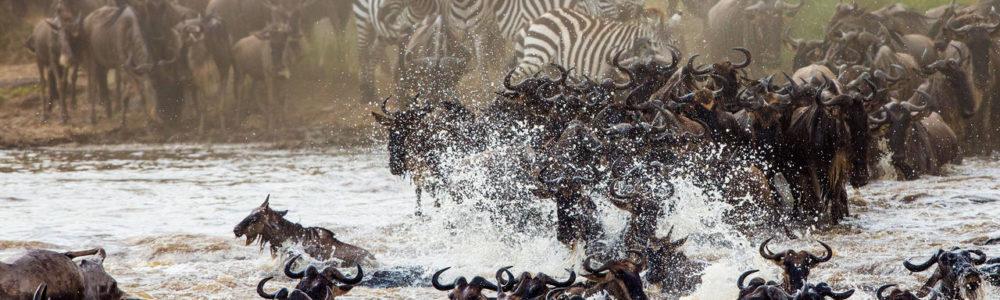 Wildebeest Migration Safari in Tanzania