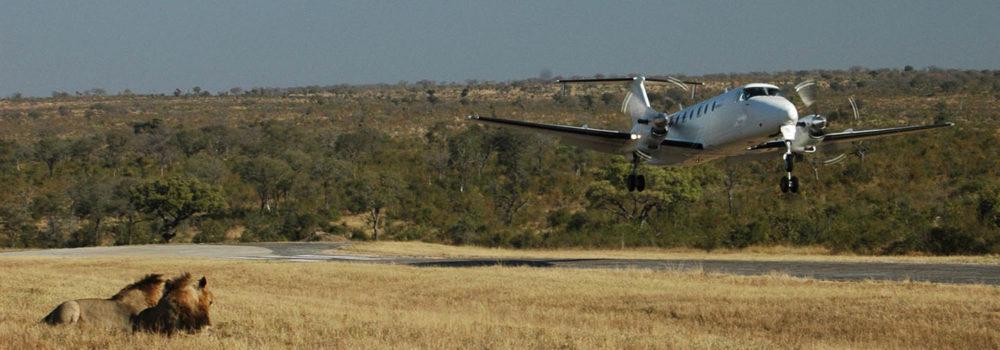 serengeti-flying-safari